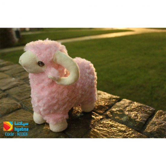 The sheep of Eid Al-Adha